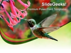 Humming Bird Animals PowerPoint Themes And PowerPoint Slides 0211