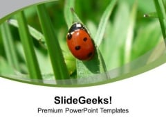 Ladybug On The Grass PowerPoint Templates Ppt Backgrounds For Slides 0713