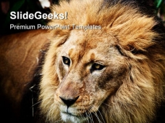 Lion Portrait Animals PowerPoint Templates And PowerPoint Backgrounds 0211