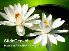Lotus flower powerpoint templates slides and graphics lotus flowers beauty powerpoint template 1110 pronofoot35fo Choice Image
