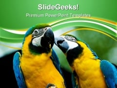 Love Parrots Animals PowerPoint Templates And PowerPoint Backgrounds 0611