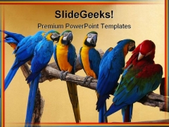 Macaw Parrots Animal PowerPoint Template 0810