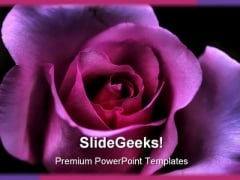 Macro Pink Rose Beauty PowerPoint Templates And PowerPoint Backgrounds 0311
