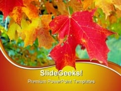 Maple Leaves Nature PowerPoint Themes And PowerPoint Slides 0511