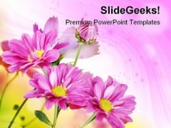 Margherite Flowers Beauty PowerPoint Templates And PowerPoint Backgrounds 0511