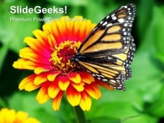 Monarch Butterfly Resting On A Summer Flower PowerPoint Templates Ppt Backgrounds For Slides 1212
