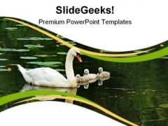Mother Swan With Babies Family PowerPoint Themes And PowerPoint Slides 0911