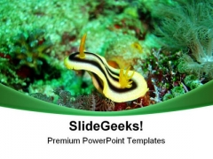Nudibranch Underwater Animals PowerPoint Templates And PowerPoint Backgrounds 0611