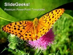 Orange Butterfly Animals PowerPoint Templates And PowerPoint Backgrounds 0211