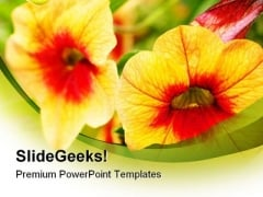 Orange Flowers Nature PowerPoint Backgrounds And Templates 0111