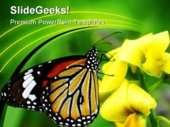 Orange Tiger Butterfly Animals PowerPoint Templates And PowerPoint Backgrounds 0211