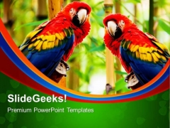 Pair Of Parrot Animals PowerPoint Templates And PowerPoint Themes 0512