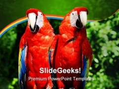 Parrots Animals PowerPoint Template 0910