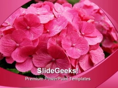 Pink Hydrangea Bush Beauty PowerPoint Templates And PowerPoint Backgrounds 0311