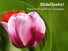 Pink Tulip With Green Background PowerPoint Templates Ppt Backgrounds For Slides 0713