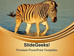 Plains Zebras Animals PowerPoint Templates And PowerPoint Backgrounds 0611