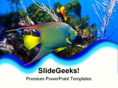 Queen Angel Fish Animals PowerPoint Templates And PowerPoint Backgrounds 0211