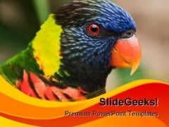 Rainbow Lorikeet Animals PowerPoint Templates And PowerPoint Backgrounds 0111