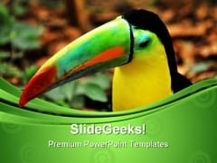 Rainbow Toucan Animals PowerPoint Themes And PowerPoint Slides 0611