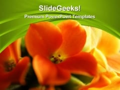 Red And Yellow Flower Beauty PowerPoint Themes And Slides 0311