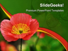Red Iceland Poppy Beauty PowerPoint Templates And PowerPoint Backgrounds 0311