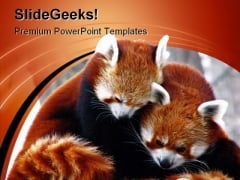 Red Pandas Cuddling Animals PowerPoint Templates And PowerPoint Backgrounds 0211