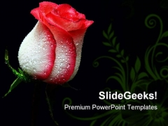 Red Rose Beauty PowerPoint Templates And PowerPoint Backgrounds 0611