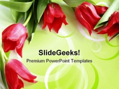 Red Tulips Beauty PowerPoint Templates And PowerPoint Backgrounds 0711