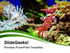 Shrimps Nature PowerPoint Themes And PowerPoint Slides 0411