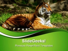Siberian Tiger Animals PowerPoint Templates And PowerPoint Backgrounds 0611
