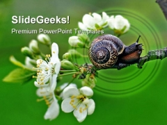 Snail Nature PowerPoint Templates And PowerPoint Backgrounds 0111