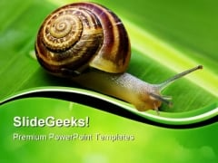 Snail On Leaf Animals PowerPoint Templates And PowerPoint Backgrounds 0611