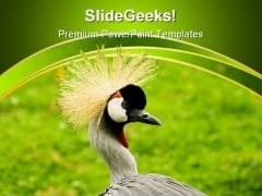 South African Crowned Crane Beauty PowerPoint Themes And PowerPoint Slides 0211