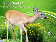 Spring Deer Animals PowerPoint Templates And PowerPoint Backgrounds 0611