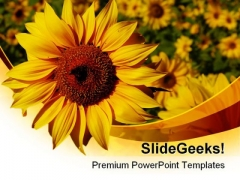 Sunflower01 Nature PowerPoint Templates And PowerPoint Backgrounds 0211