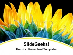 Sunflower Beauty Nature PowerPoint Backgrounds And Templates 1210