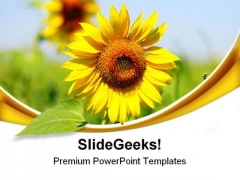 Sunflower Beauty PowerPoint Themes And PowerPoint Slides 0511