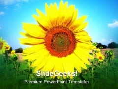 Sunflower In Sky Beauty PowerPoint Templates And PowerPoint Backgrounds 0211