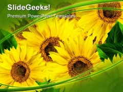 Sunflowers01 Nature PowerPoint Templates And PowerPoint Backgrounds 0311