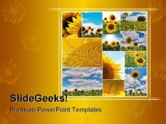 Sunflowers Collage Nature PowerPoint Template 0810