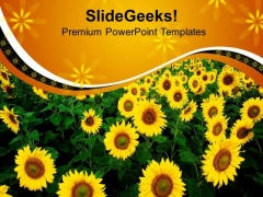 Sunflowers With Yellow Background PowerPoint Templates Ppt Backgrounds For Slides 0713