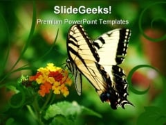 Swallowtail Butterfly Animals PowerPoint Templates And PowerPoint Backgrounds 0211