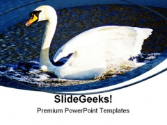 Swan Animals PowerPoint Templates And PowerPoint Backgrounds 0411