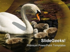 Swan Stroll Animals PowerPoint Themes And PowerPoint Slides 0511