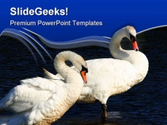 Swans Together Animals PowerPoint Themes And PowerPoint Slides 0511