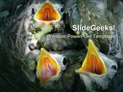 Thrush Nestlings Animals PowerPoint Templates And PowerPoint Backgrounds 0111