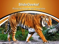 Tiger Animals PowerPoint Templates And PowerPoint Backgrounds 0611