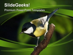 Tomtit On Branch Nature PowerPoint Templates And PowerPoint Backgrounds 0211