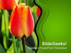 Tulip Bud For Decoration Wedding PowerPoint Templates Ppt Backgrounds For Slides 0313