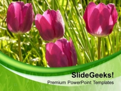 Tulip Flower Background With Green Color PowerPoint Templates Ppt Backgrounds For Slides 0713